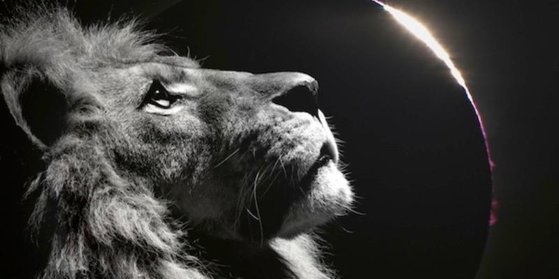 獅子座女人個性分析