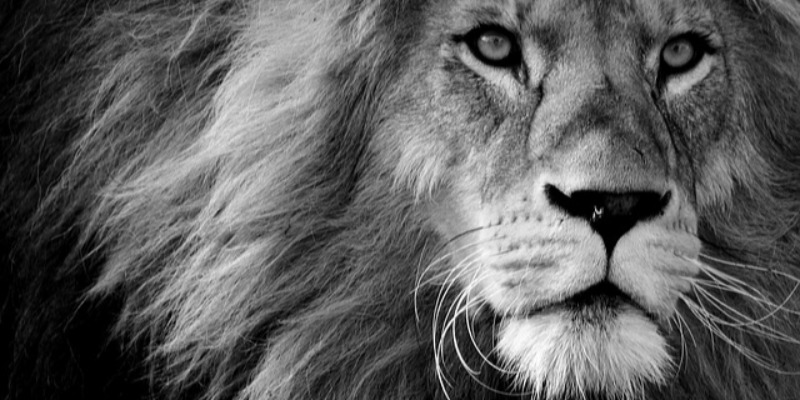認識獅子座