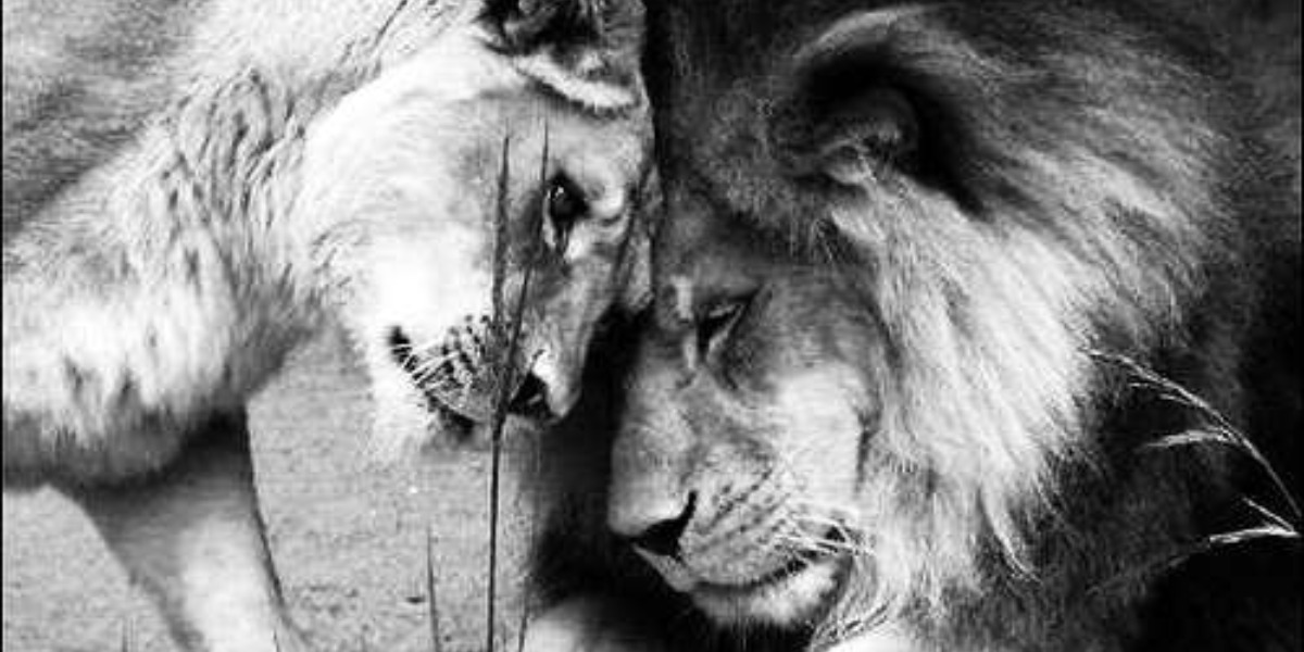如何跟獅子座談戀愛