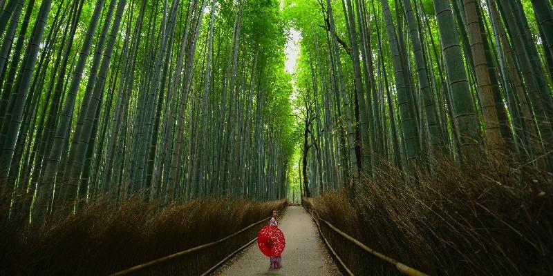 又去日本旅行!十二星座為什麼喜歡「返鄉下」?